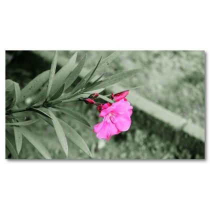 Αφίσα (ροζ, λουλούδι, μαύρο, λευκό, άσπρο)
